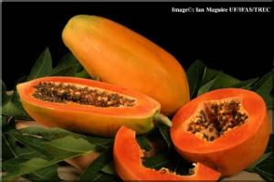 pe  papaya-lg